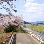 桜と椿と華やぎの時間